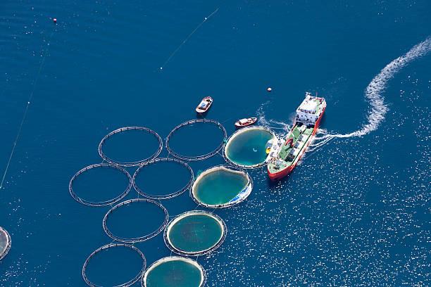 Aerial view of fish farm:スマホ壁紙(壁紙.com)