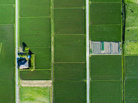 Satoyama - Scenery「Aerial view of paddy field」:スマホ壁紙(14)