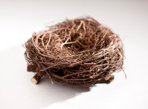 鳥の巣「Empty nest」:スマホ壁紙(14)