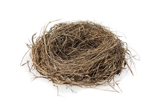 鳥の巣「空の巣」:スマホ壁紙(5)