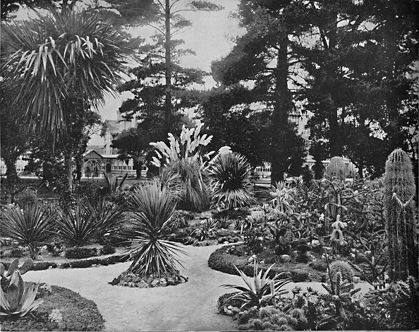 Arizona「Arizona Garden Monterey」:写真・画像(0)[壁紙.com]
