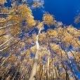 サンタフェ国有林壁紙の画像(壁紙.com)