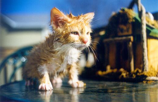 子猫「私はフリーのバスルーム。」:スマホ壁紙(15)
