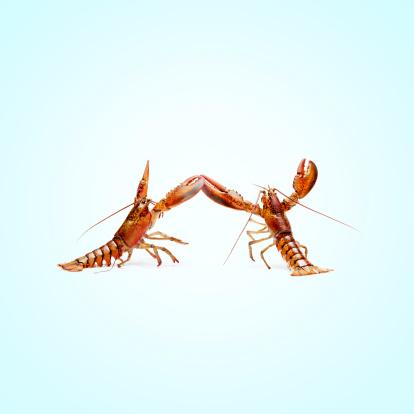 Claw「lobstermayhem dance 02」:スマホ壁紙(4)