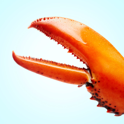 Biology「lobstermayhem claw 01」:スマホ壁紙(18)