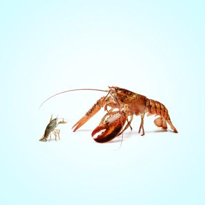 Claw「lobstermayhem fight 02」:スマホ壁紙(14)