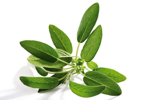 Sage「Sage, Salvia officinalis」:スマホ壁紙(9)
