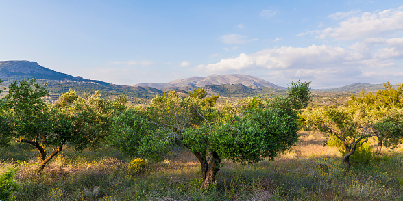 Grove「Greece, Dodecanese, Rhodes, View of Ataviros mountain, olive orchard」:スマホ壁紙(8)