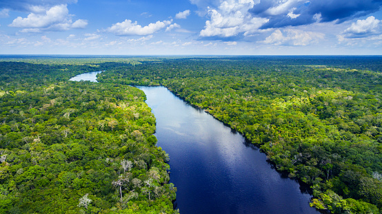 Famous Place「Amazon river in Brazil」:スマホ壁紙(16)