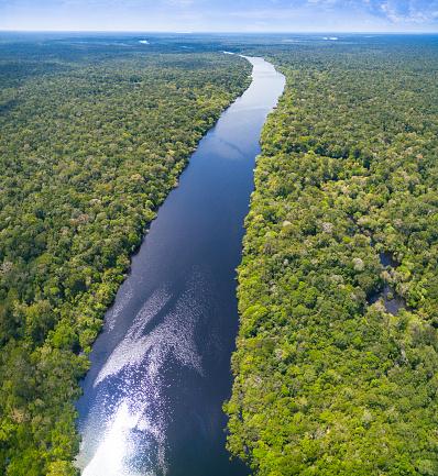 アマゾン熱帯雨林「ブラジルのアマゾン川」:スマホ壁紙(4)
