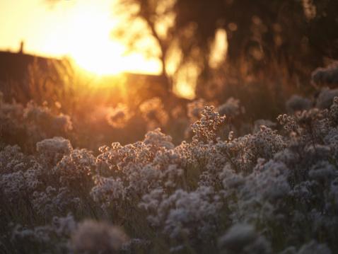 秋「ゴールドの秋の夕日」:スマホ壁紙(2)