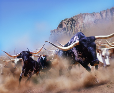 Digital Composite「Longhorn cattle running, California, USA (Digital Composite)」:スマホ壁紙(6)