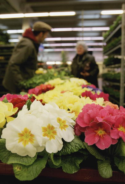 Flower Shop「Consumers Enjoy Spring Flowers」:写真・画像(14)[壁紙.com]