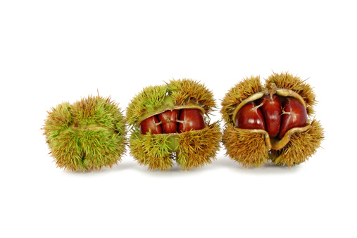 Chestnut - Food「Chestnuts inside husk」:スマホ壁紙(5)