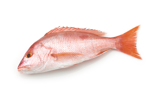 Fish「Large red snapper fish on white background」:スマホ壁紙(9)