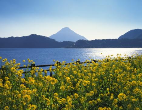アブラナ「Rape-blossom field with lake and Mt. Kaimon in the background, Kagoshima prefecture, Japan」:スマホ壁紙(12)