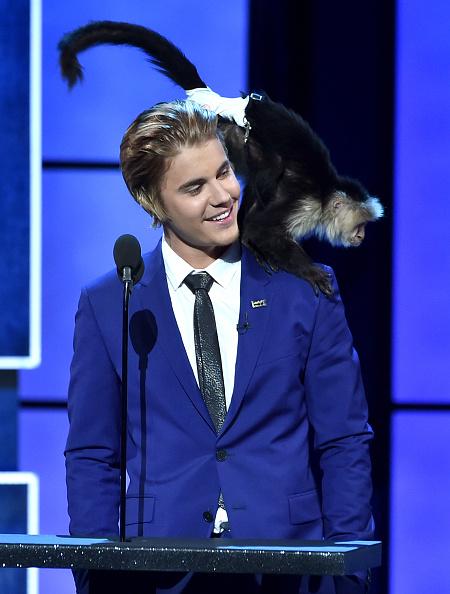 Monkey「The Comedy Central Roast Of Justin Bieber - Show」:写真・画像(1)[壁紙.com]