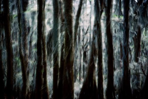 Composite Image「Spanish moss (Tillandsia usneoides) on cypress trees (image sandwich)」:スマホ壁紙(8)