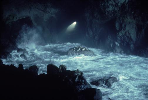 Sea Lion「Sea Lions in cave, OR」:スマホ壁紙(17)