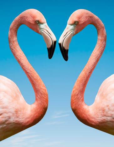 Love - Emotion「Flamingo with blue sky」:スマホ壁紙(3)