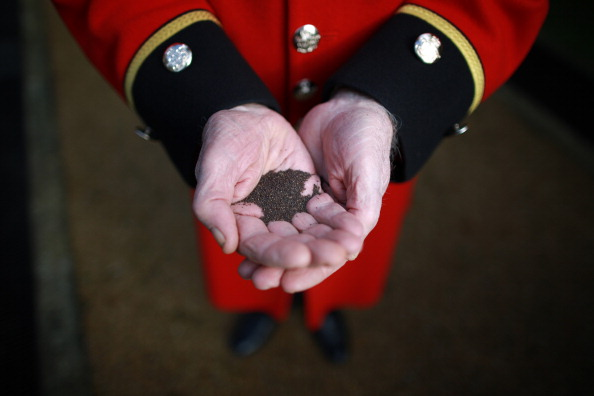 Seed「Chelsea pensioners Plant World War One Memorial Meadow」:写真・画像(14)[壁紙.com]