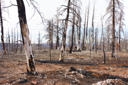 Utah「Burned forest in Bryce Canyon National Park」:スマホ壁紙(3)