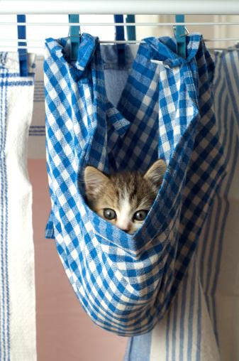 Kitten「Curiosity」:スマホ壁紙(1)