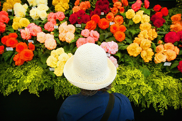 Horizontal「Garden Enthusiasts Flock To Hampton Court Flower Show」:写真・画像(5)[壁紙.com]