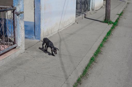 Lost「Street dog on sidewalk」:スマホ壁紙(4)