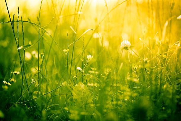 美しい自然:スマホ壁紙(壁紙.com)