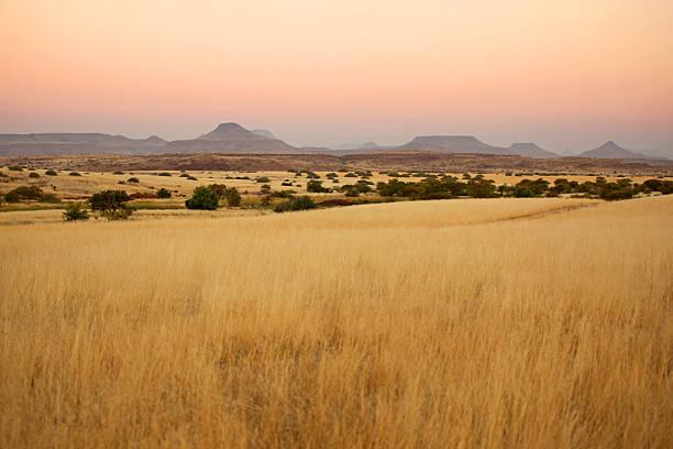 Beautiful Northern Namibian Savannah Landscape at Sunset:スマホ壁紙(壁紙.com)