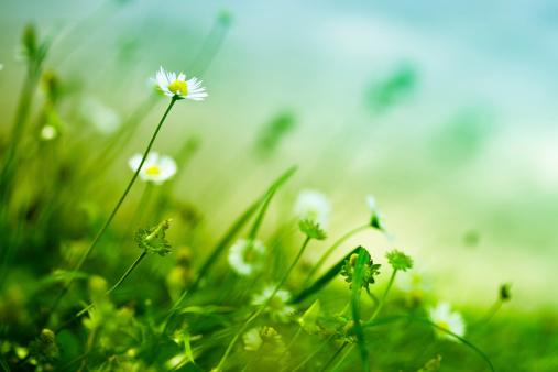 花畑「美しい自然」:スマホ壁紙(4)
