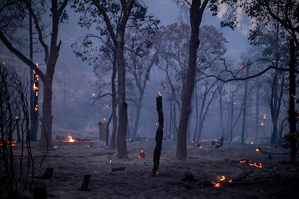 Sequoia National Forest「French Fire In California Burns Almost 15,000 Acres」:写真・画像(17)[壁紙.com]