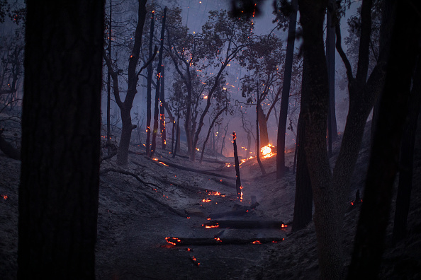 Sequoia National Forest「French Fire In California Burns Almost 15,000 Acres」:写真・画像(0)[壁紙.com]