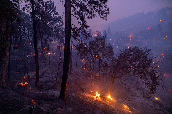 Sequoia National Forest「French Fire In California Burns Almost 15,000 Acres」:写真・画像(4)[壁紙.com]