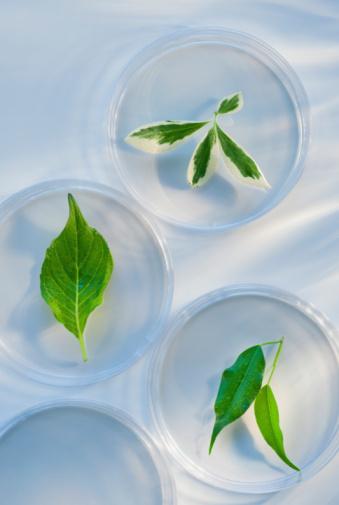 Pennsylvania「Leaves in Petri dishes」:スマホ壁紙(0)