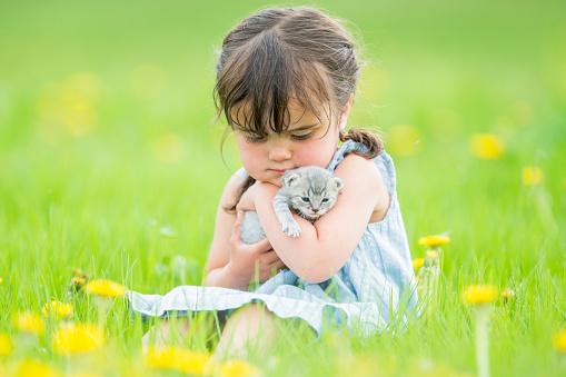 Kitten「好きなペット」:スマホ壁紙(3)
