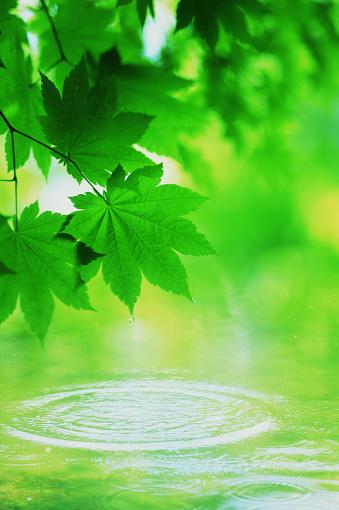 Japanese Maple「Water ripples under tree leaves」:スマホ壁紙(7)