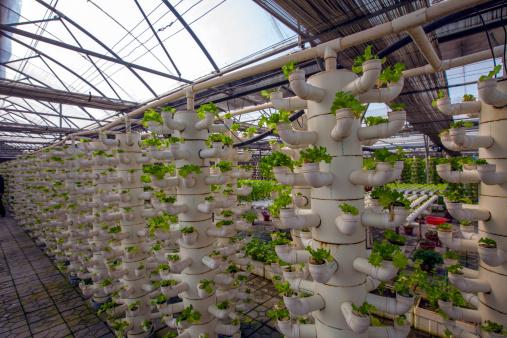 Planting「Plants in greenhouse」:スマホ壁紙(4)