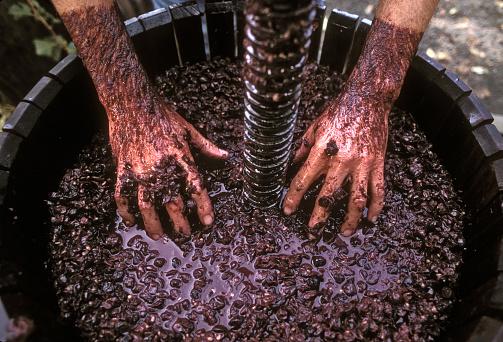 1990-1999「Pressing wine grapes by hand」:スマホ壁紙(16)