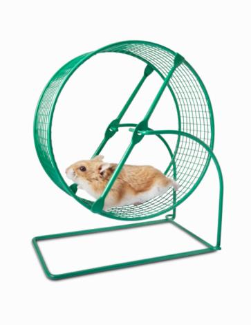 Hamster「Hamster running on a Hamster Wheel」:スマホ壁紙(16)