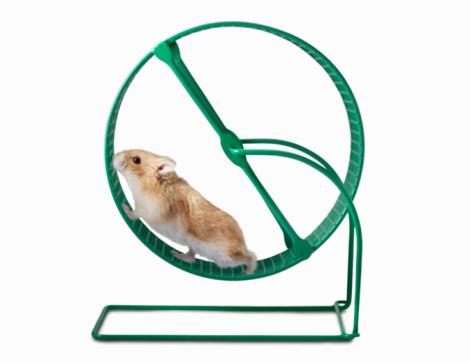 Hamster「Hamster running on a Hamster Wheel」:スマホ壁紙(15)