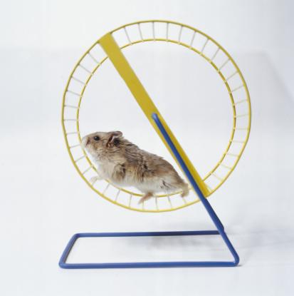Hamster「Hamster Running in Wheel」:スマホ壁紙(19)