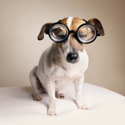 Horn Rimmed Glasses「Sleepy dog with Geek Glasses」:スマホ壁紙(11)