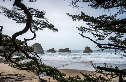 Cannon Beach「Sitka Spruce frames the beach」:スマホ壁紙(14)