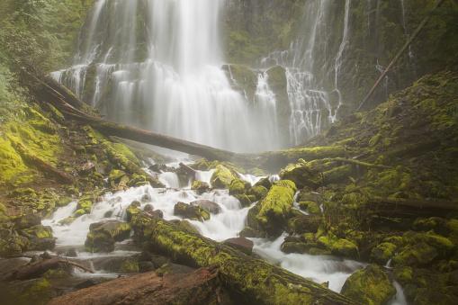 ウィラメット国有林「Proxy Falls」:スマホ壁紙(12)