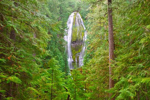 ウィラメット国有林「Proxy Falls In Willamette National Forest; Oregon United States Of America」:スマホ壁紙(19)