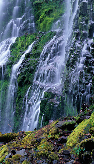 Willamette National Forest「Proxy Falls」:スマホ壁紙(11)