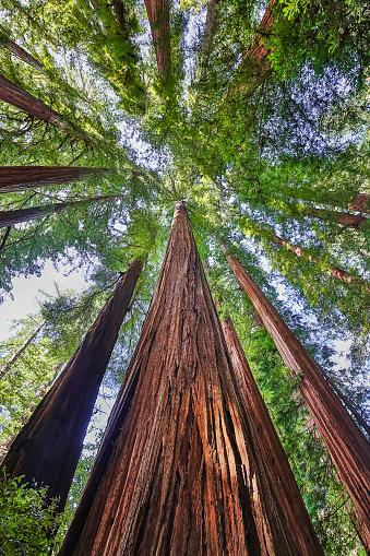 Strength「Redwood National Park,California,USA」:スマホ壁紙(6)