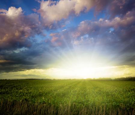 Baby Corn「Breathtaking Midwest Sunset Over Corn Field」:スマホ壁紙(0)